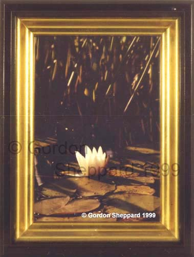 northern-lily-1999-framed